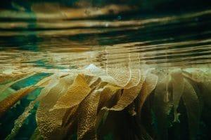 Umweltfreundliche Stoffe aus Algen herstellen
