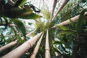 Nachhaltige Stoffe aus Bambusfasern