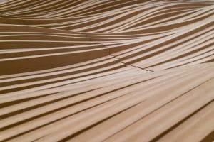 Natürliche Holzfasern für die Herstellung von Kleidung einsetzen
