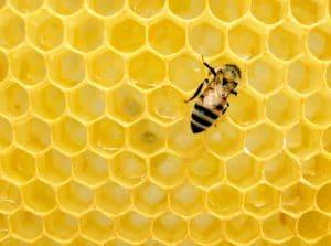 Honig - ein natürliches Antibiotikum