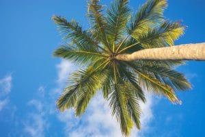 Kokosblütenzucker als Alternative zu Kristallzucker