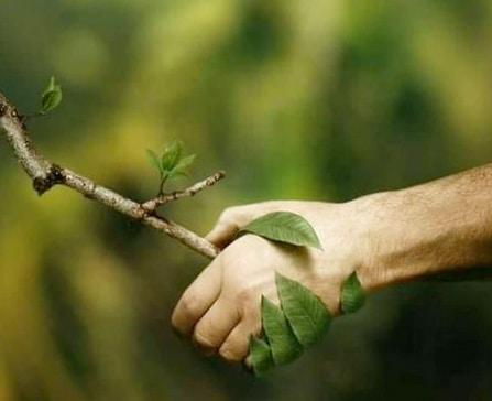 natürliches desinfektionsmittel hand